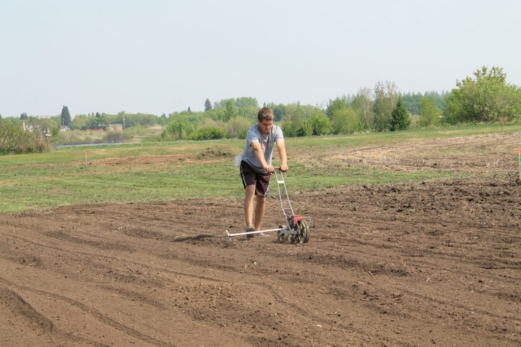 Planting carrots.