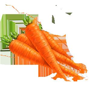carrotvector..